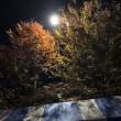 秋の夜長にジョギングはいかが?