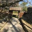 郡山城(奈良)の桜