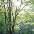 光る緑眩しい草木
