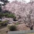 金龍桜と展望台
