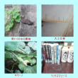 台風18号対策3