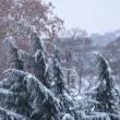 初雪の待降節第三主日