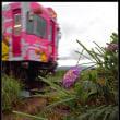 梅雨と言えば、紫陽花とBATADEN。