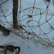 シカ除け網の点検‐萩の里自然公園 シラネアオイ群生地