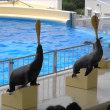 福岡マリンワールド海の中道 水族館へ kasuga