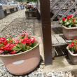 花の植え替え(春)