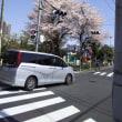 桜🌸満開😺