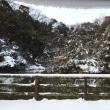 横浜に雪が降る!!真っ白な朝の不動池!!