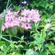 箱根の植物