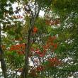 ♪‥秋のバラと道の駅の続き。