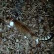 庭猫 374