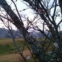【旅】【紅葉】【寒桜】【四季】