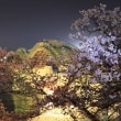 錦帯橋×桜