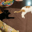 我が家ののんびり猫たち