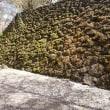 懐古園~小諸城跡の桜が楽しめる公園