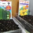 種植えた。
