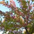 10 月 18 日 秋晴れの柏の葉公園にて