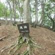 強風の三十三間山(842.3m)