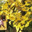 花彩々  黄色の葉