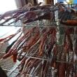 数量限定「カマトロ」登場!本日「春分の日」は元気に通常営業!!刺身と手作り干物の専門店「発寒かねしげ鮮魚店」です。