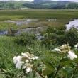 八島湿原・1