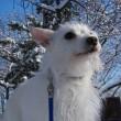 犬と坂と雪衣