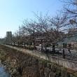 今年の 『桜クイズ』!締め切りのばしたよん!(と写真追加)