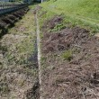 歩道の草刈り