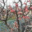 三月の菜園に咲く花々