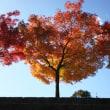 秋を満喫してきた