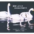 「軽井沢堤の白鳥たち」の写真展、開催中♬