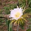 詩615 沖縄の独立 2