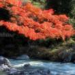 紅葉の御岳渓谷 2