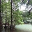 2度め 九大の森