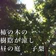 和のすすめ(66)柿の木の 樹陰が涼し 昼の庭:ka ki no ki no ju i n ga su zu shi hi ru no ni wa: 伝統のクールシェアのすすめ