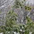 【気まぐれ写真館】 雪の「春分の日」