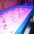 室内水耕栽培 60 (H30.3.1~)