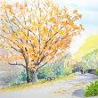秋真っ盛りの昭和記念公園をスケッチで満喫しました  (11/28)