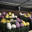 【京都府立植物園】第51回菊花展開催のお知らせ(2017年10月20日~11月15日)