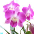#聖書の言葉 #1人豊か #虹の香り