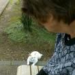 テニスコートで、白猫にあう