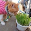 3月15日 美味しい猫草