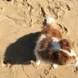 本日ビーチ犬