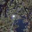 ネクトンbioと夜桜