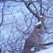 十勝平野に再び降雪