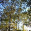 山岳点景:秋待つ森で