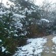 雪は滅多に降らないのですが ・・・