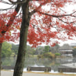 津山衆楽園の紅葉