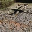 ぶらり旅・酒船石遺跡(奈良県高市郡明日香村)