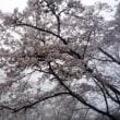 南高尾(草戸峠~大垂水~城山~高尾山~草戸峠)